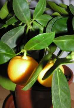 Obrázek pokojové rostliny 2