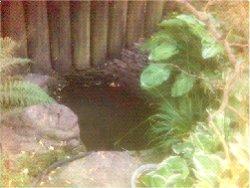 zahradní jezírko 007.jpg
